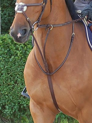 Dyon Raised Running Martingale